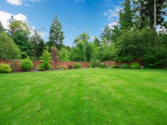Große Rasenfläche ohne Moos