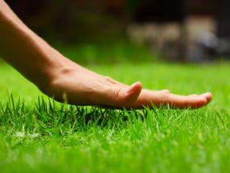 Hand über neu ausgesätem Rasen