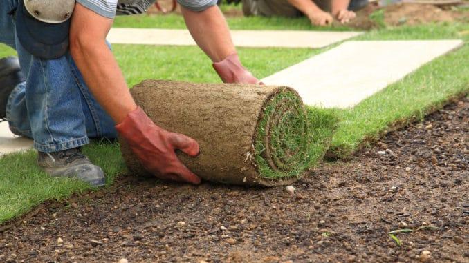 Rollrasen ist eine beliebte Rasensorte