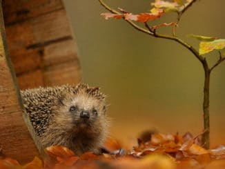 Ein Igel sucht Schutz im Wald