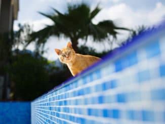 Katze am Pool