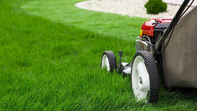Es gibt pflegeleichten Rasen