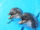 Wasserenthärtungsanlage Delfin