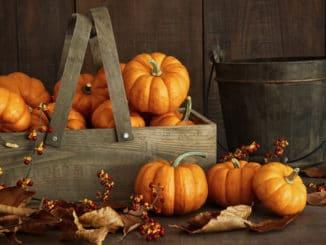 Kürbisse als Herbstdeko
