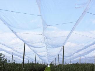 Vogelschutznetze über einer Obstplantage