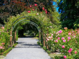 Rosengarten in Christchurch, New Zealand
