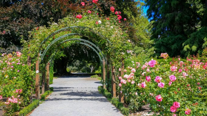 Rosengarten in Christchurch, New Zealand