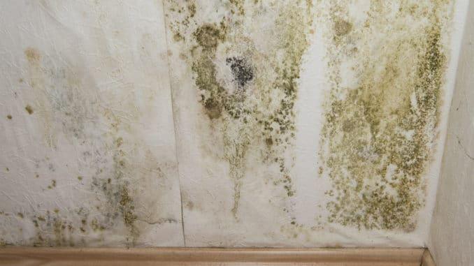 Eine Wand mit Schimmel